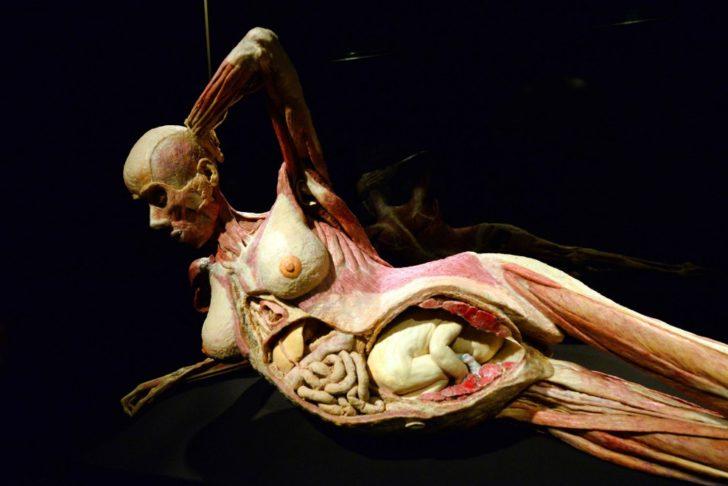 body massage a milano organi sessuali femminili