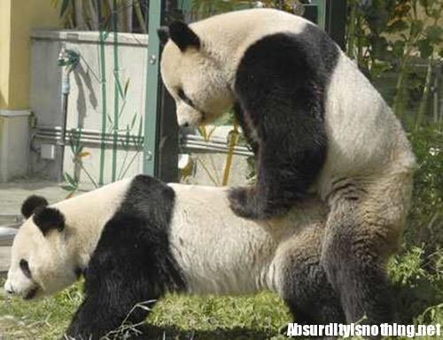 ehm! ......questa più che osé è quasi hard, ce ne sono altre belle sul sito dans immagini osé 19-Amazing-Animals-Captured-While-Making-Love-013