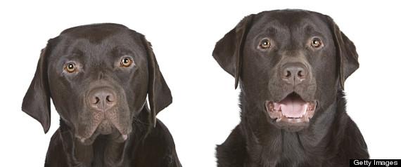 Dog Cloning Uk