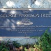"Albero commemorativo di George Harrison infestato dai ""beatles"""