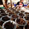 Basta carne, è tempo di cominciare a mangiare insetti