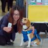 Sherlock, il cane che riporta gli oggetti smarriti in aereo ai proprietari