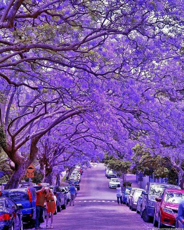 milson park australia